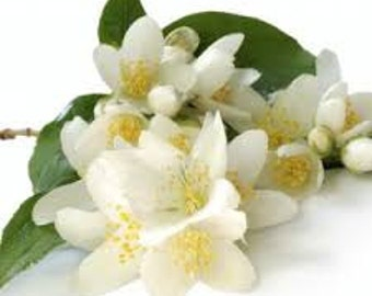 White Jasmine & Mint Jo Malone Type Fragrance Oil
