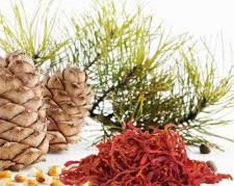 Cedar & Saffron Fragrance Oil - Candles - Wax Melts - Wax Tarts - Body Spray - Linen Spray - Massage Oil - Reed Diffuser Oil