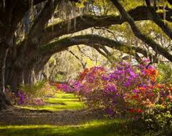 Spanish Moss Premium Fragrance Oil Use To Make Personal Fragrance - Candles- Soap- Bath Products - Cleaning Products - Incense - Cologne