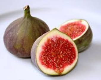Fig Premium Fragrance Oil Available In Several Sizes