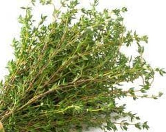 Thyme (Thymus Vulgaris) Essential Oil Available In Several Sizes   Therapeutic Aroma Therapy Soap Making Bath And Body Products