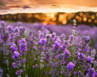 Juniper Wood & Lavender Fragrance Oil