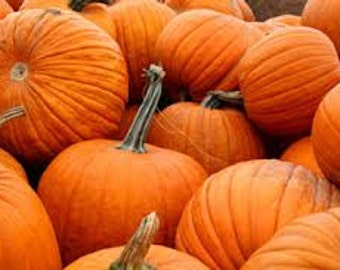 Pumpkin  Premium Fragrance Oil  16 oz. - 8 oz. - 4 oz. - 2 oz.  - 1 oz. - 1/2 oz. Bottle Or 1/3 oz. Roll – On