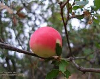 Apple & Oak Fragrance Oil