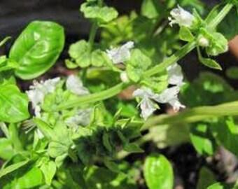 Lemon Flower Basil Premium Fragrance Oil  Available In Several Sizes