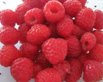 Raspberry Premium Fragrance Oil Used For Candle-Soap Making/ Bath-Body/Cleaning/Incense/Diffuse/Air Freshener/Cologne/Tarts/Sprays