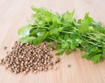 Coriander  Essential Oil ( Coriandrum Sativum )  Pure Essential Oil  Available In Several Sizes