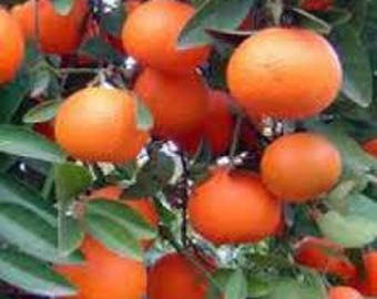 Mandarin Red Essential Oil Available In Several Sizes