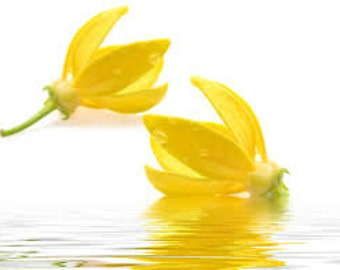 Ylang Ylang Premium Fragrance Oil Uses: Diffuse For Air Freshener/Aroma Therapy/Bath-Beauty Products /Soap/Candles/Incense/Cleaning Products