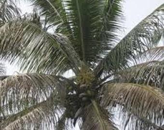 Black Coconut Yankee Type Fragrance Oil