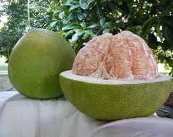 Pomelo Coconut Premium Fragrance Oil  Available In Several Sizes