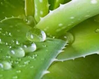 Aloe Vera Fragrance Oil