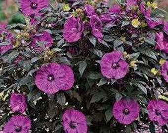 Hibiscus & Plum Premium Fragrance Oil  Use To Make Personal Fragrance - Candles- Soap- Bath Products-Cleaning Products-Diffuse-Air Freshener