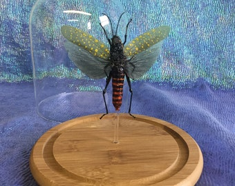 Q61A Entomology Taxidermy Locust Cicada Specimen Glass Dome Display Collectible