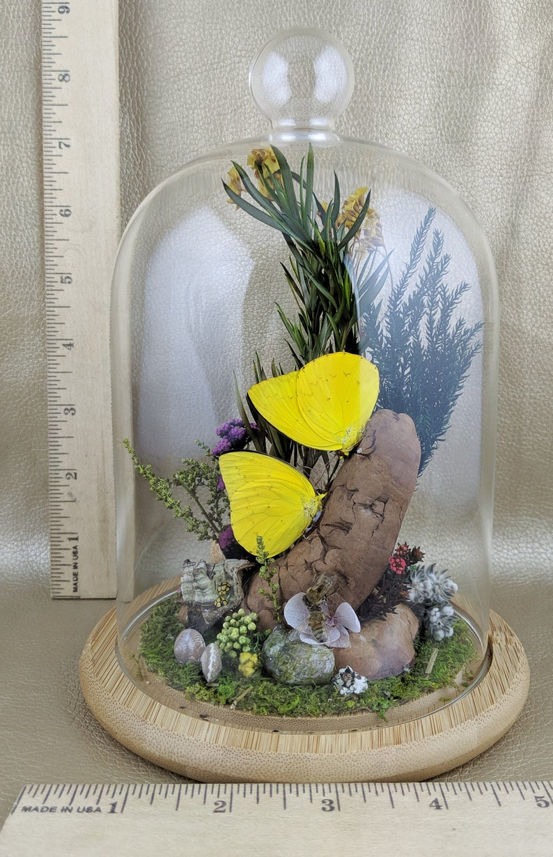 W135 Entomology Taxidermy kissing Butterflies bees snails ladybugs Glass Dome display oddity curiosity insects specimen collectible decor