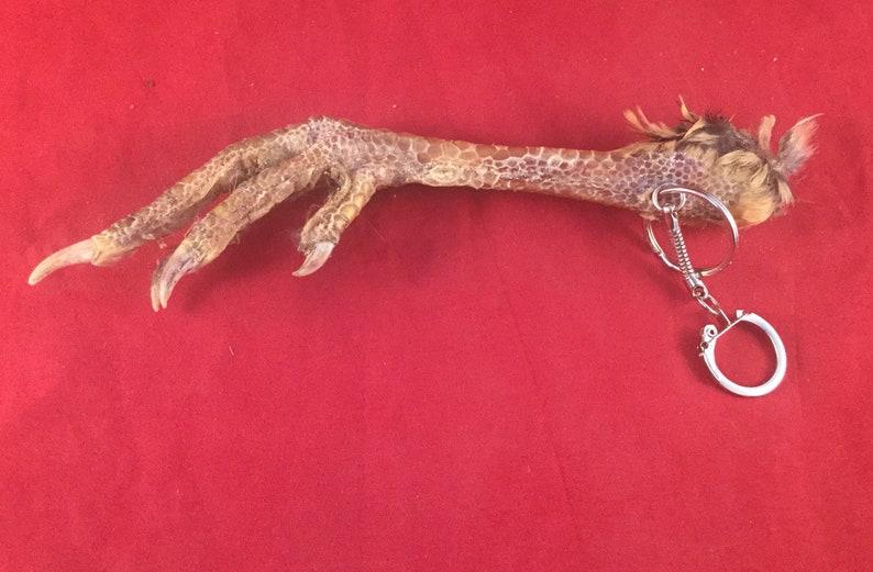 Q1 Taxidermy Chicken Foot Key Chain talisman voodoo pirate  cd2451965f07