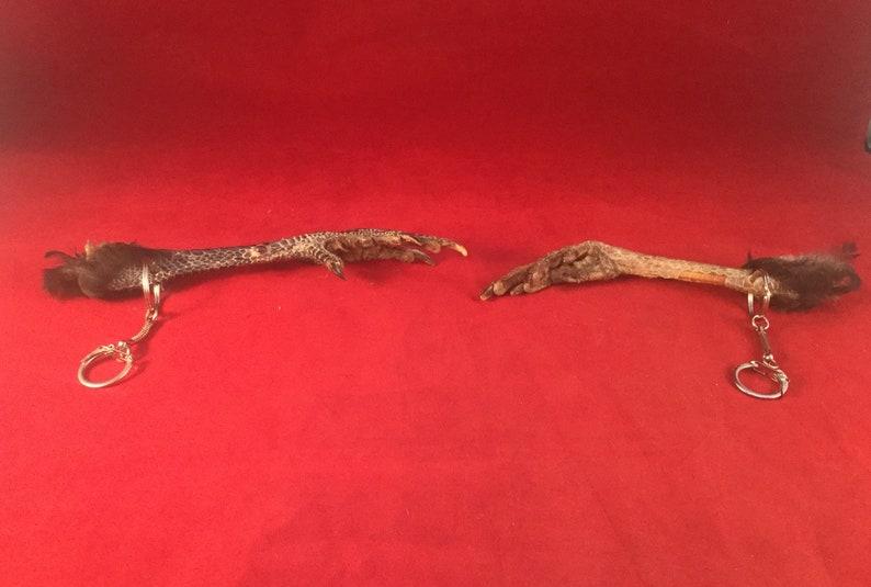 Q1  Taxidermy Chicken Foot Key Chain talisman voodoo pirate costume farmer collectible specimen