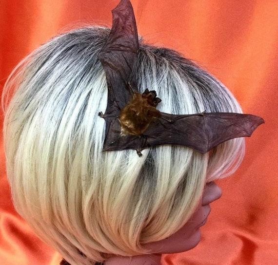 q30a Taxidermy Real Fruit Bat Specimen Jar Display oddity collectible Cy Sphinx