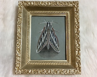 Original art: Hyles lineata, or white-lined sphinx moth in vintage frame. Unique nature illustration.
