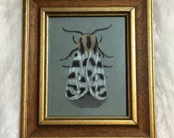 Original art:  Grammia incorrupta or arctiine moth watercolor in vintage frame. Unique nature illustration.