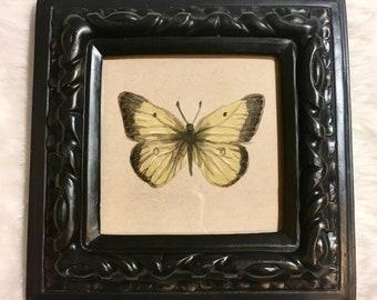 Original art:  Colias eurytheme, or orange sulphur butterfly watercolor painting, ready to hang. Unique vintage nature illustration