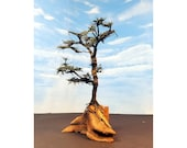 Model Fir Tree Diorama on Myrtlewood Base Natural Scenery Faerie Woodland Evergreen Cypress Tree