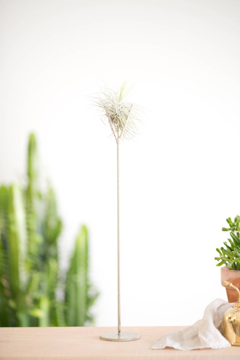 Tall Size Speckled White Air Plant Stand Tillandsia Plant Etsy