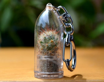 Live Cactus Keychain // Shining Knight Cactus Terrarium Keychain Accessory