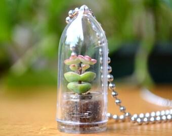 Live Succulent Necklace // Baby's Necklace Terrarium Necklace