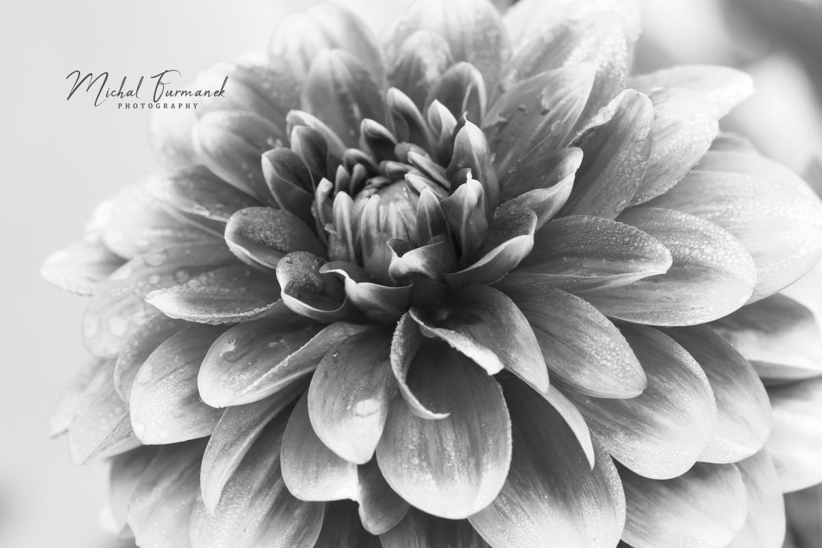 Black /& White Flower Close Up Floral Canvas Wall Art Picture Large Any Size