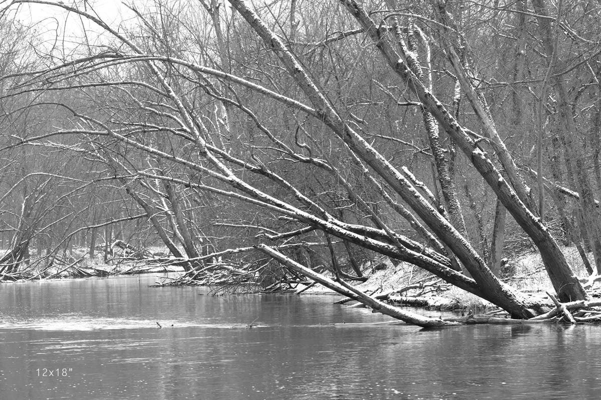 Winter river scenery black and white trees art photography large woods landscape photo print decor paper or canvas picture 5x7 to 40x60