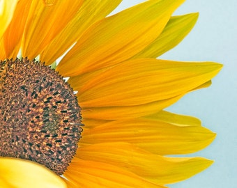 Sunflower with blue and yellow- wall art
