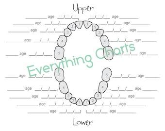 Baby Tooth Chart - PDF/Printable