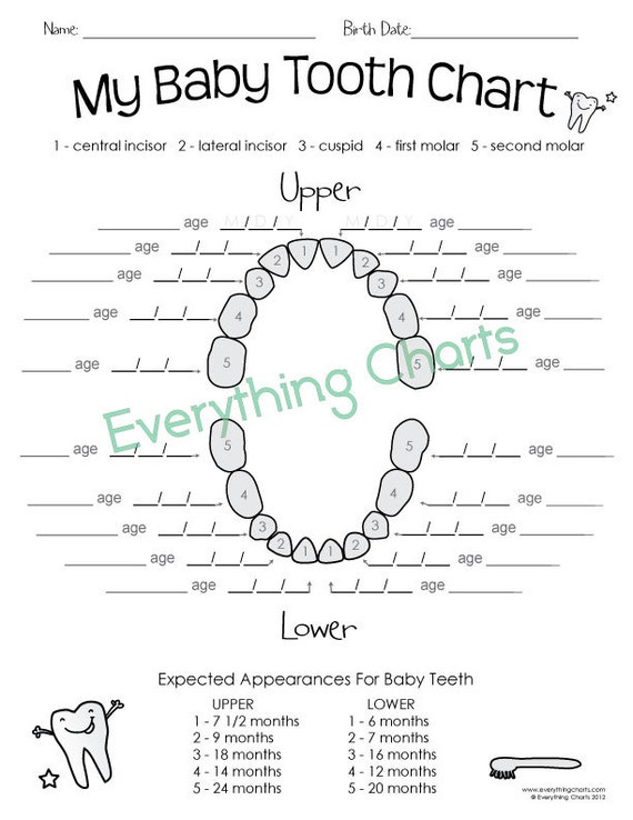 Versatile image throughout printable teething chart