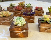 Succulent WEDDING Favor, Bridal Shower favor, Baby shower, christmas gift, birthday gift, holiday table, party, coworker, craft, bat mitzvah