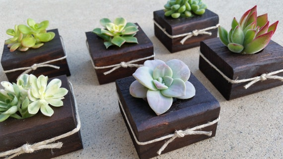Succulent WEDDING Favors dark wood Succulent Bridal Shower | Etsy