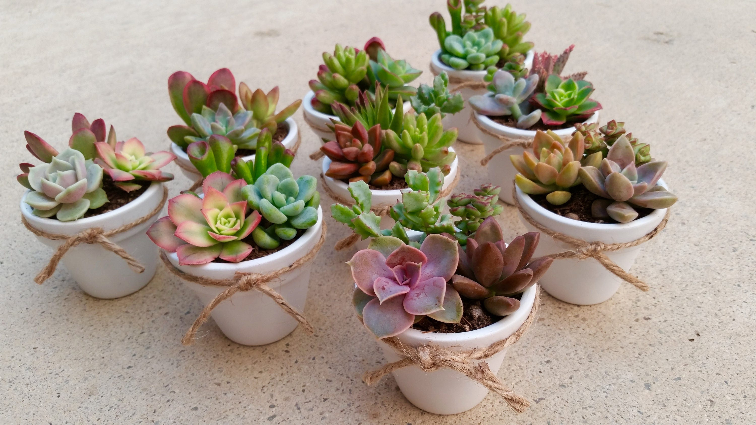 50 Succulent Wedding Favors Bridal Shower Favor Baby Shower Etsy