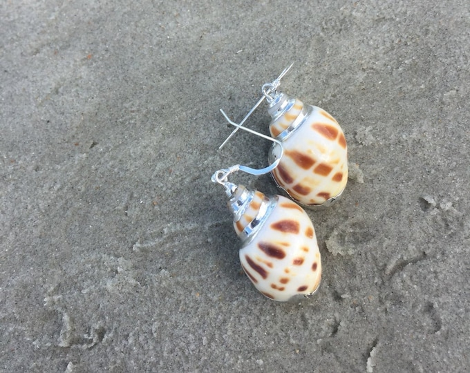 Small Silver Shell Earrings with Sterling Earwire