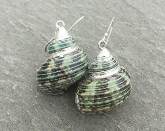 Small Green Turban Shell Earrings