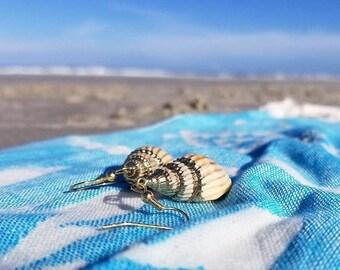 Gold Nassa Shell Earrings