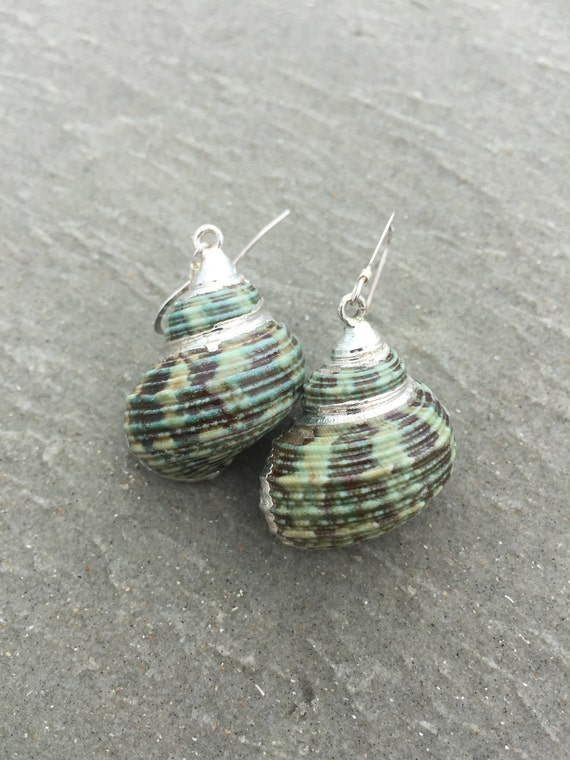 Small Green Turban Shell Earrings
