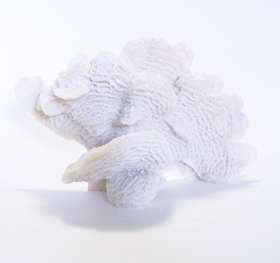 Blanc de mer décoratif corail Figurine en résine - mer côtière vie thème nautique, plage Home Decor, accessoires décoratifs Shabby Chic