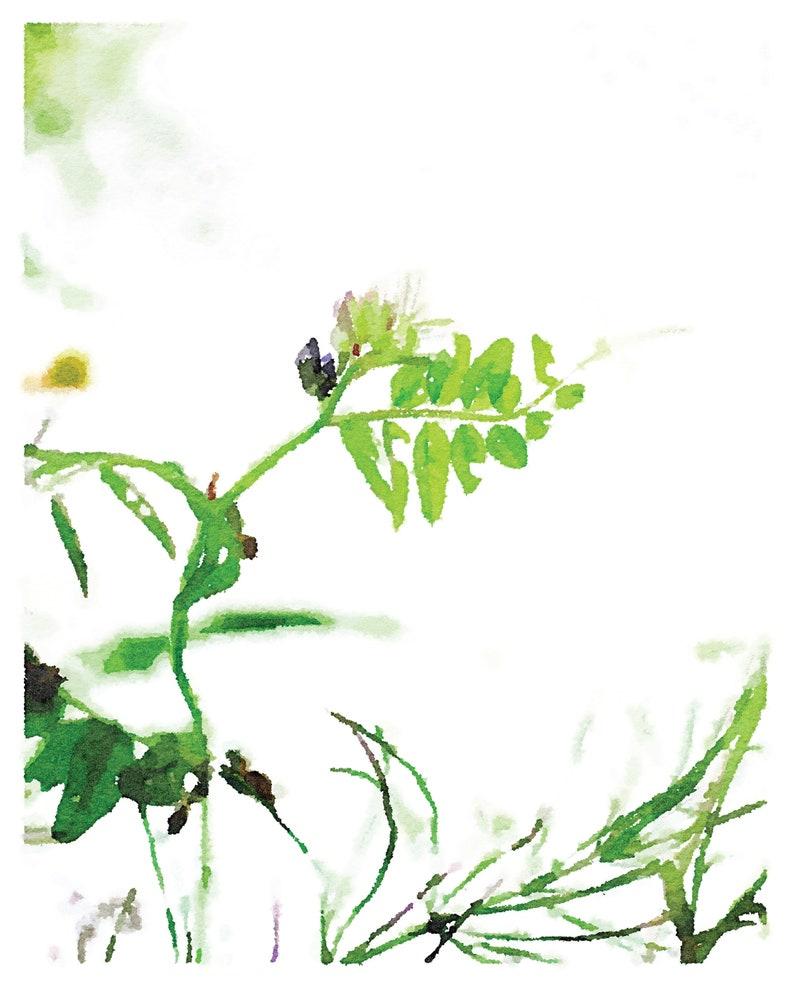 Minimalist Spa Decor Nature Photography 16x20 18x24 Neutral Botanical Print Wildflowers Sweet Pea Watercolor Wall Art Digital Download