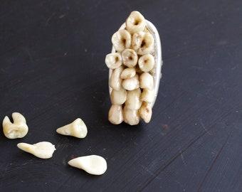 ebe7e3619544 Joyería del diente humano