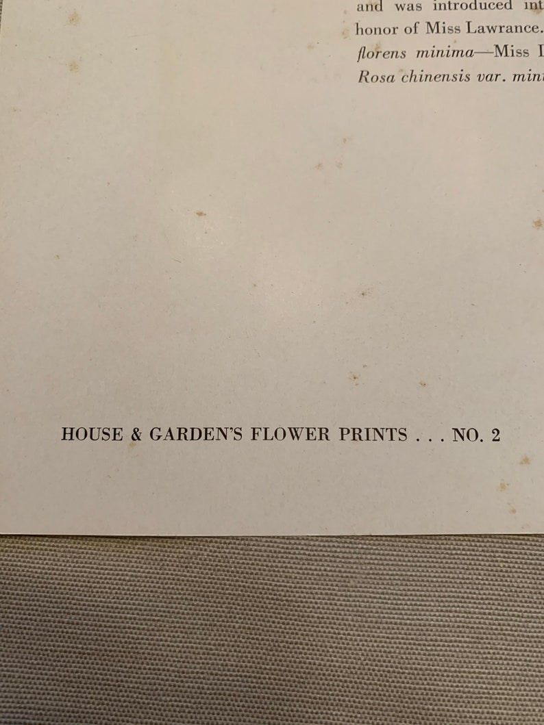 Vintage 1937 House and Garden Floral Print