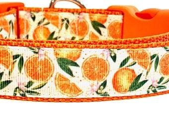 Orange Dog Collar, Clementine Dog Collar, Fruit Dog Collar