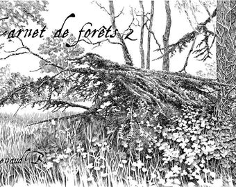 Forest Notebook 2