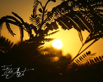 Sunset and Leaves Silhouette Photograph - Jamaica - Digital Download - Landscape Photography