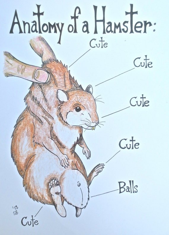 Hamster Art Print Anatomy Artwork Illustration Humor Etsy