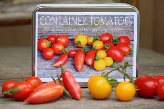 Heirloom Tomato Seeds Gift Set Container Gardening Diy Etsy